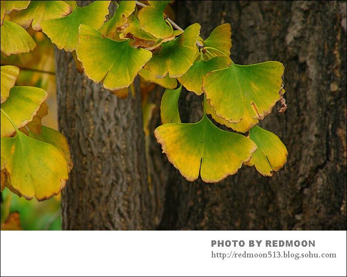 彩泥做秋天大树