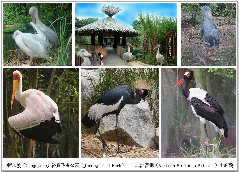 欢聚飞禽公园