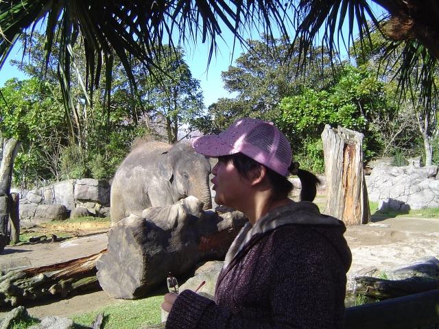 ckland zoo 新西兰奥克兰动物园
