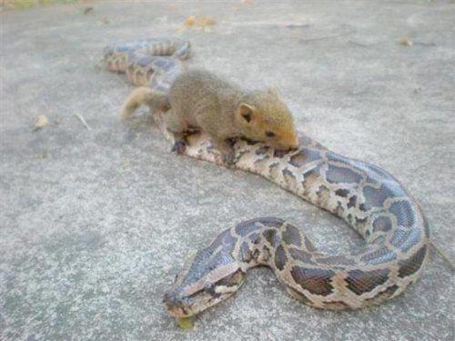 蛇在睡觉手绘图片