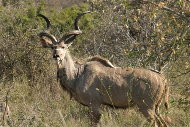 埃托沙国家动物园(三)斑马喝水和非洲旋角羚羊-梦回非洲-搜狐博客